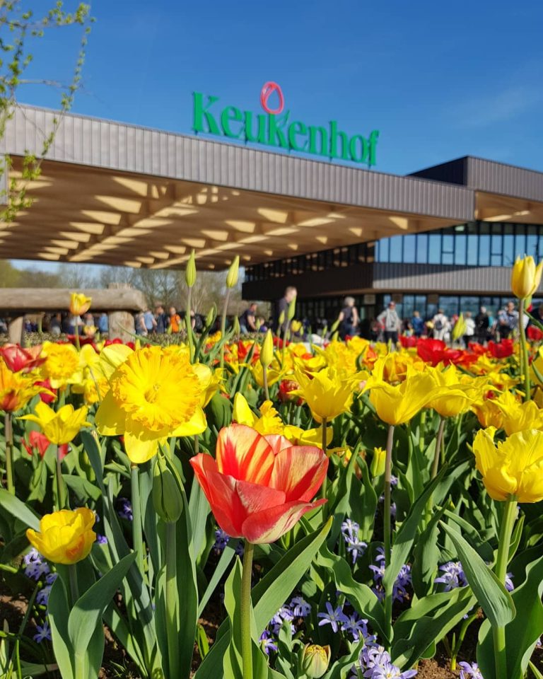 Tulip Amsterdam Keukenhof: Private Keukenhof & Flower Fields Tour From Amsterdam