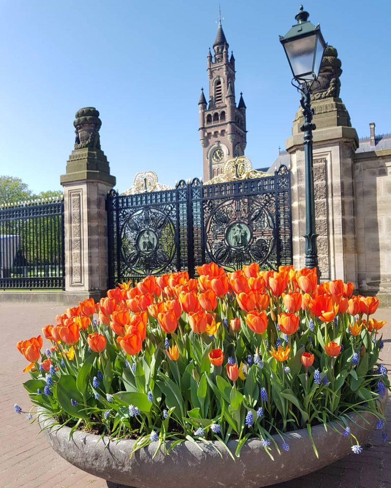 Private tour the Hague peace palace tulips